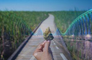 stock_price_cannabis