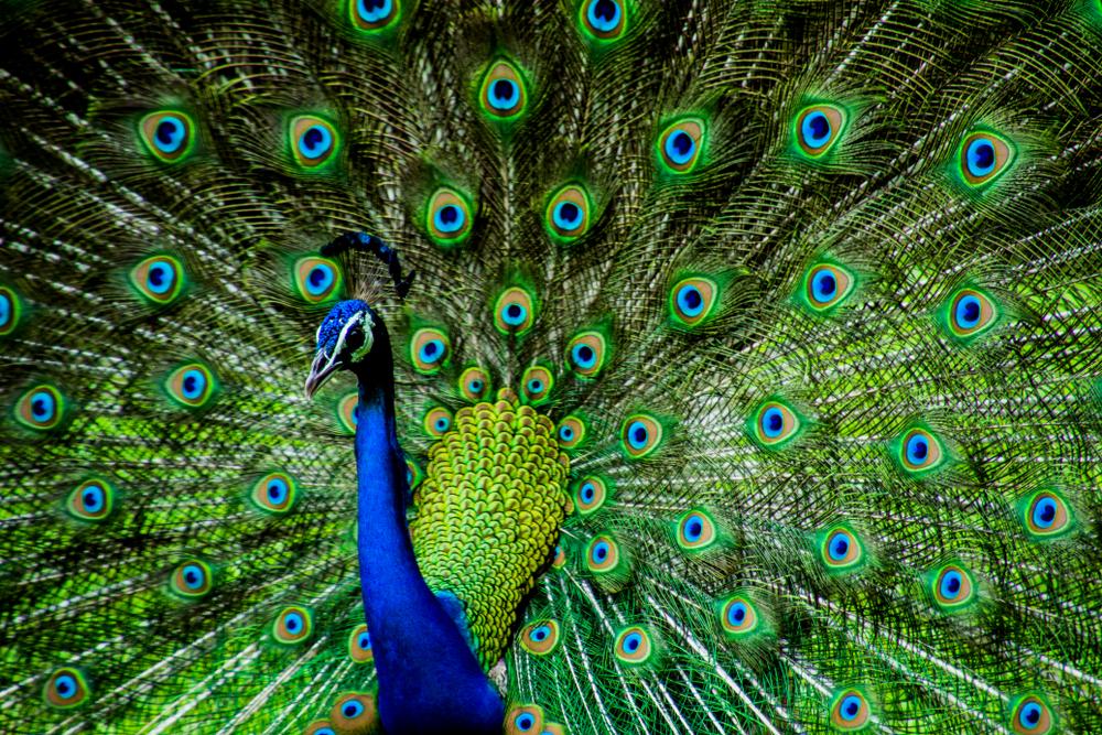 comcast peacock